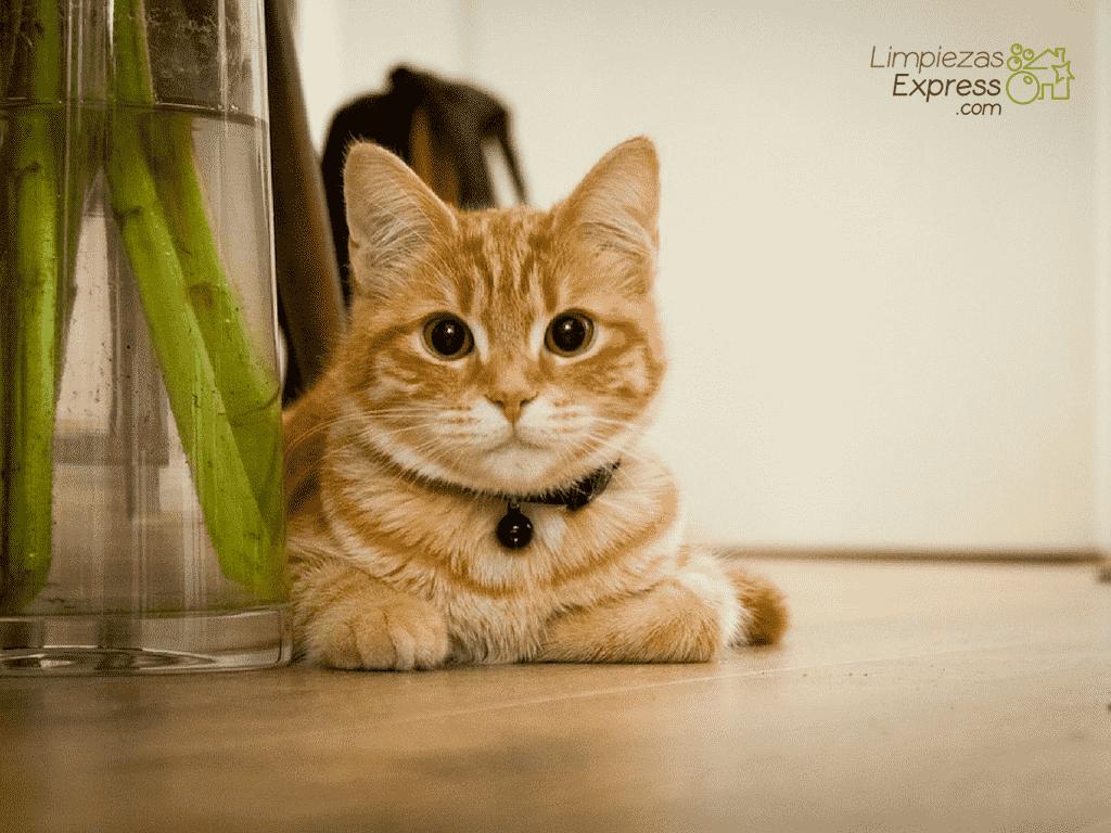 mantener con limpieza hogar con mascotas