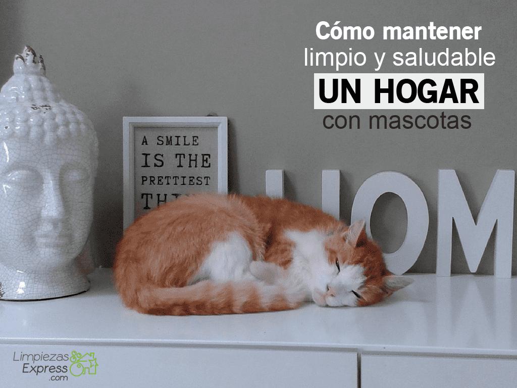 mantener limpio hogar con mascotas